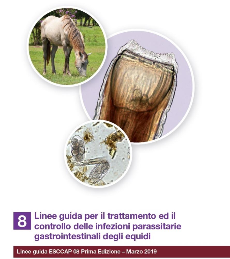 Pubblicate le nuove Linee Guida per il controllo delle parassitosi gastrointestinali degli Equidi